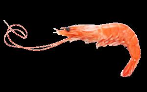 fulchers seafood royal red shrimp
